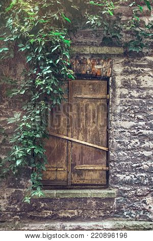 Olld wooden window with closed shutters on a stone wall, entwined with ivy