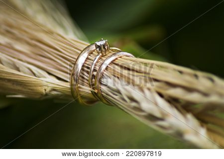 Gold wedding rings and ears of wheat