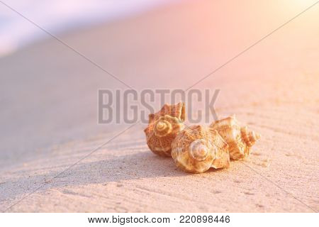 Three shells on the sea beach with waves on a background.