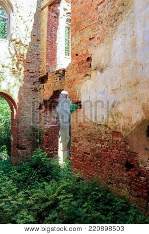 The thicket in the ancient monastery. The ruins of an ancient monastery in a thicket of wild forest.