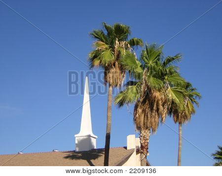 Church Steeple And Palms