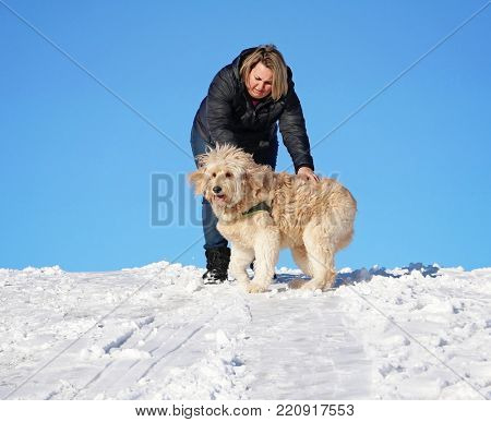 pretty labradoodle playing in the snow on a hill with a woman who is petting him on a cold clear winter day