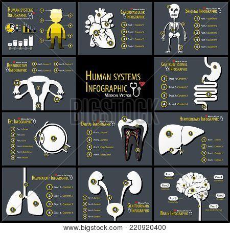 Set of human systems infographics . Cardiovascular . Skeletal . Reproductive . Gastrointestinal . Eye . Dental . Hepatobiliary . Respiratory . Genitourinary . Neurological .