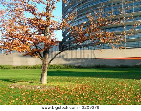 The Tree On Background Of The Beautiful Building.