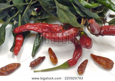 A red chili plant put to dry