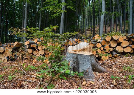 Destruction of forests for commercial purposes. Damage