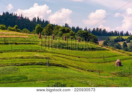 haystacks on grassy slopes in rural area. lovely agricultural scenery in summertime