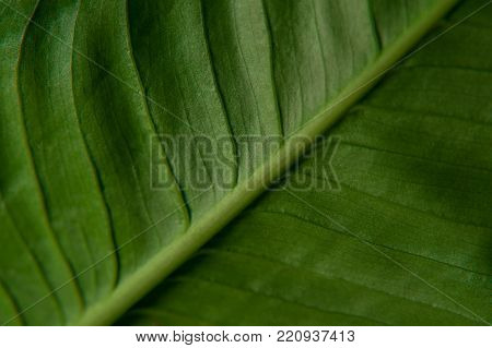 Texture of green leaf. Artistic macro close-up nature texture background.