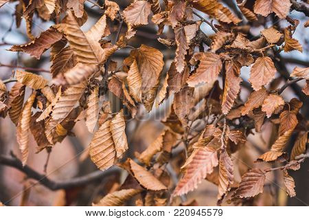 The hornbeam leaves the whole area as a background or a pattern
