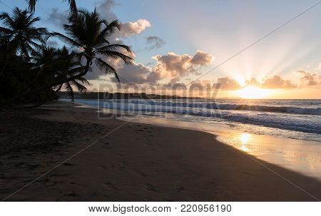 Sunset, paradise beach and palm trees, Martinique island, French West Indies.