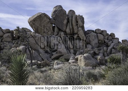 close up of geologic formation of rocks and boulders at Tree National Park