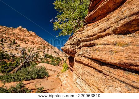 Landscape with rock formations in Zion National Park, Utah, USA