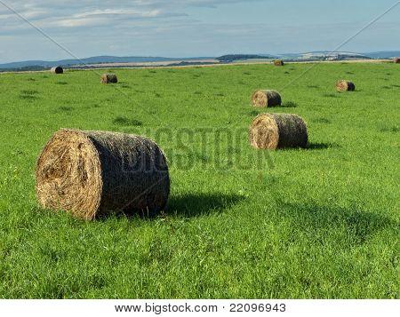 straw harvest field