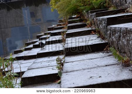 Wet shale square stone steps with weeds and moss.