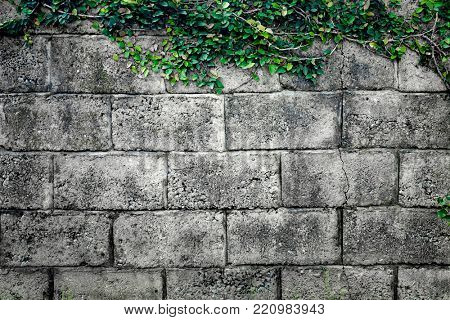 Grey stone wall consisting of massive bricks and braided with climbing plants. Geometric rectangular pattern. Ideal background for collages and illustrations. Artistic retouching.