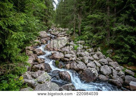 The lonely creek flowing between the weathered granite boulders surrounded by the dense woods. Strength and power of the wild nature. The Tatra Mountains, Slovakia.