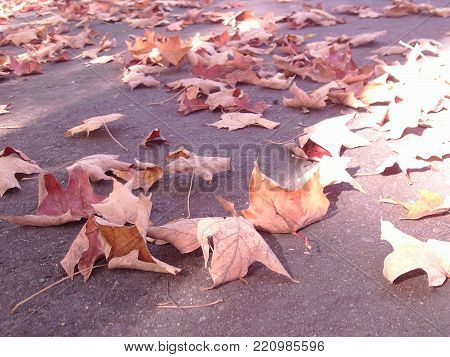 Dry wilted leaves on pavement under sun and shade.