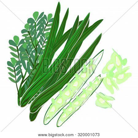 Drumstick Trees,moringa,horseradish Pods And Seeds, Green, Long Pods, Local Vegetables In Asia, Have