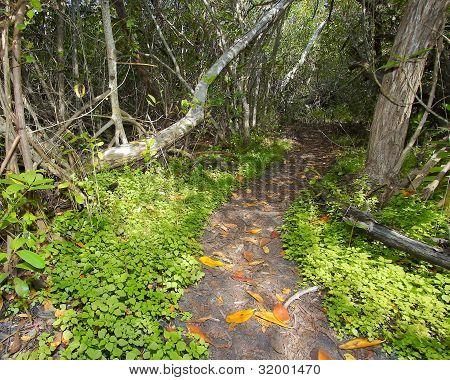 Buttonwood Jungle