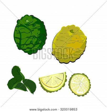 Bergamot Is Green And Ripe, Yellow. Kaffir Lime And Leaves, Sliced Fruit Pieces Vector Illustration