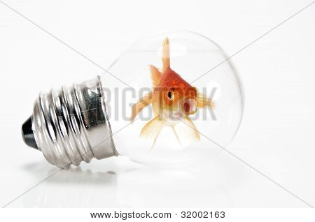 Goldfish Trapped In A Light Bulb