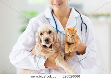 Vet Examining Dog And Cat. Puppy And Kitten At Veterinarian Doctor. Animal Clinic.