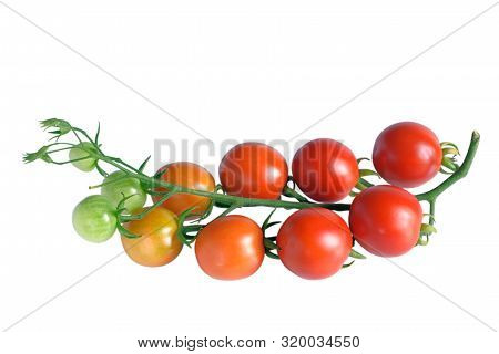 Branch Of Cherry Tomatoes With Ripe, Unripe And Green Fruits, Isolated On White