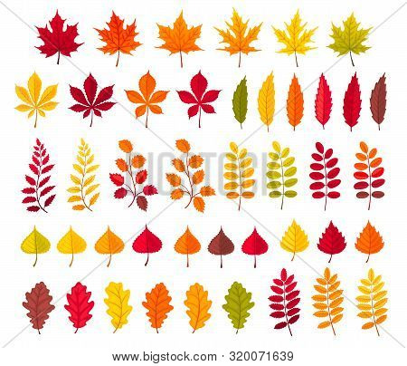Hand Drawn Colorful And Bright Autumn Leaves Vector Illustration. Maple And Oak, Rowan And Birch, Po