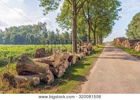 Backlight Image Of A Dutch Landscape With Tree Stumps And Stacked Sawn Tree Trunks On The Edges Of A