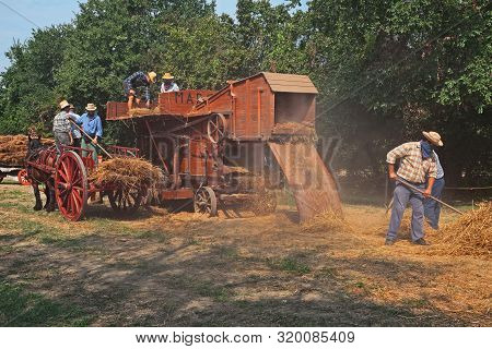 Bastia, Ravenna, Italy - August 25, 2019:  Farmers Re-enacting The Old Farm Works With An Ancient Th