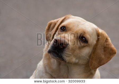 Dog Looks