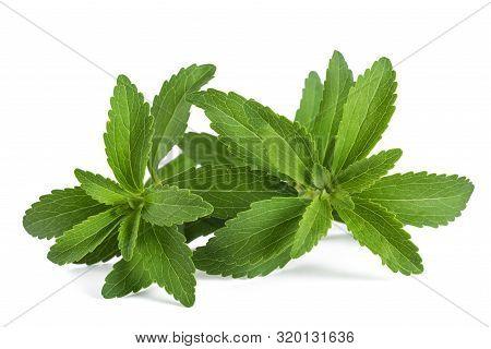 Stevia Rebaudiana  Isolated On A White Background