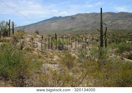 Rinccon Mountains In The Sonora Desert In Central Arizona Usa