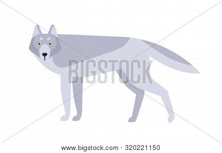 Wolf Flat Vector Illustration. Scandinavian Style Wild Animal Isolated On White Background. Grey Can