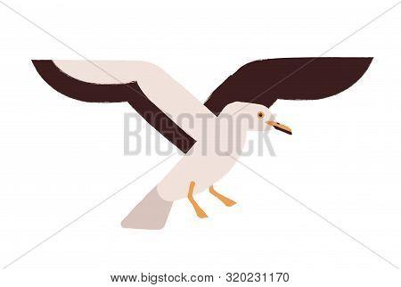 Flying Seagull Flat Vector Illustration. Marine Bird, Atlantic Seabird. Wildlife Fauna Species. Beau