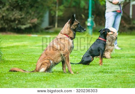 Different Breeds Of Domestic Quadrupeds On The Dog Sports Competition.