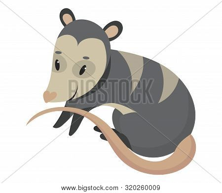 Cartoon Possum.vector Illustration Of Possum. Drawing Animal For Children. Zoo For Kids.