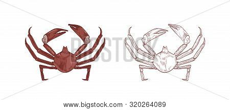 Sea crabs vector illustrations set. Colorful and monochrome hand drawn crustaceans on white background. Restaurant delicacy seafood. Northern kelp crab, aquatic creature with pincers design element. poster