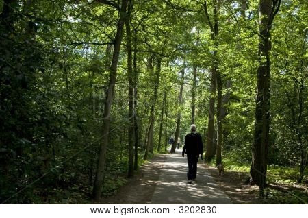 man is walking his dog in nature poster