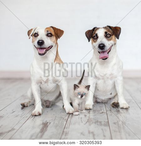 Smiling dogs and cat at white background. Two happy cute dogs with kitten sitting at home
