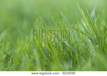 Field Of Green Gras Close Up On A Bright Day. Focus In Font3