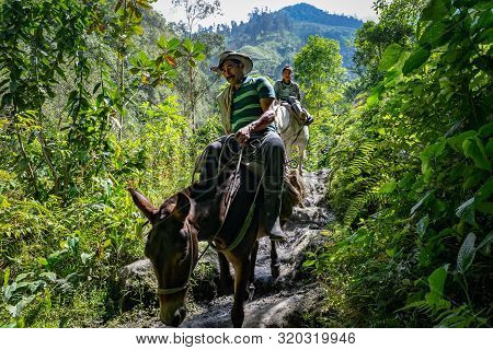 Tolima, Colombia - August 7, 2019: Peasant And His Son Riding Mules In The Colombian Mountains Going