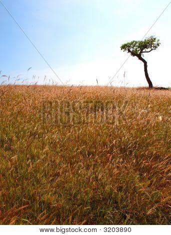 棵孤独的树