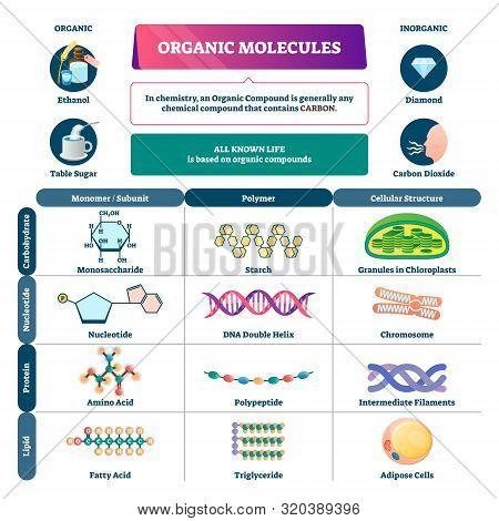 Organic Molecules Vector Illustration. Labeled Chemical Educational Scheme. Diagram Description With