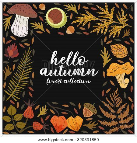 Hello Autumn Square Frame With Floral Forest Harverst Vector Illustrations Such As Cepe, Girolle, Ch