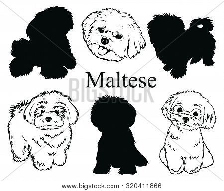 Maltese Set. Collection Of Pedigree Dogs. Black And White Illustration Of A Maltese Dog. Vector Draw