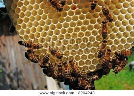 Life Of Bees. Bees Are Builders.