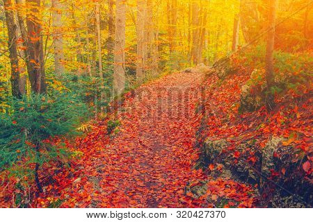 Path In Natural Park With Autumn Trees. Sunny Autumn Picturesque Forest Landscape With Sunlight. Fal