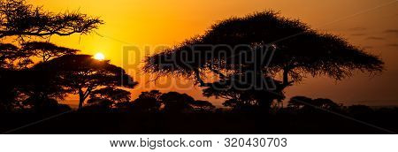 African Sunset With Acacia Trees In Masai Mara, Kenya. Savannah Background In Africa. Typical Landsc