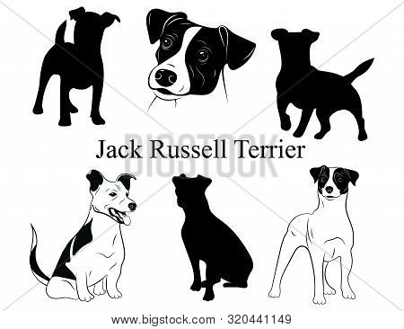 Set Of Jack Russell Terrier. Collection Of Pedigree Dogs. Black And White Illustration Of A Dog Jack